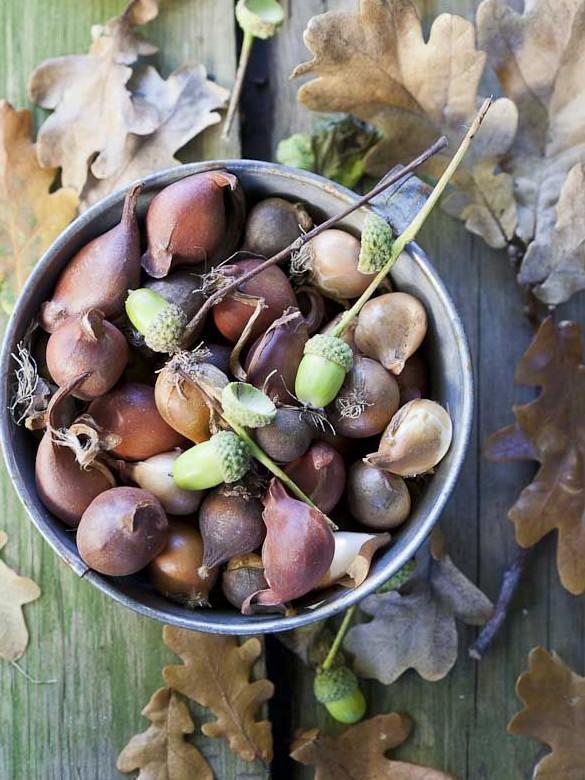 őszi tál